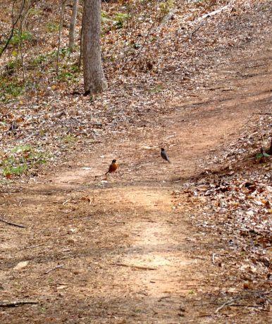 Path Birds