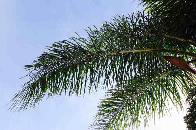 Palm leaves - 1 copy